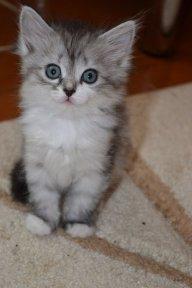 Настя Кошка